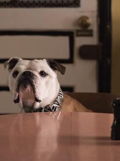 Les chiens au cinéma: 9 chiens récompensés pour leurs prestations sur grands écrans