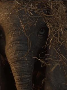 «Dumbo» - Par le visionnaire Tim Burton