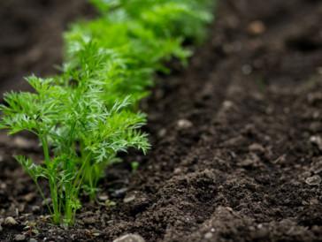 Soil to Soul: HEALTH. FUTURE. FOOD. SYMPOSIUM.