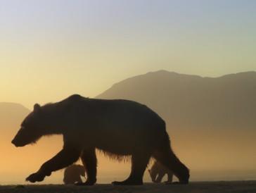 «L'ours en moi» - Un documentaire sublime et sauvage