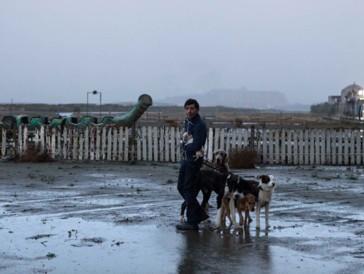 6 - L'ensemble des chiens au casting de «Dogman» (2018)