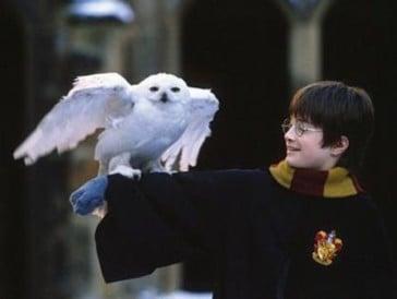 8. Harry Potter à l'école des sorciers (2001)