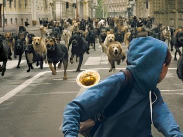 7 - L'ensemble des chiens au casting de «White God» (2014)