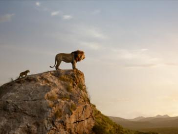 «Der König der Löwen» sorgt dank passender Kulisse für einen lauschigen Kinoabend unter dem Sternenhimmel.
