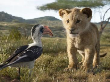 3. «Le Roi Lion» I Classique de 1994, Le Roi Lion revoit sa copie et retrouve son éclat d'antan à travers la vision de Jon Favreau. Nouveau cheval de bataille des studios Disney, cette obsession de retraverser les histoires légendaires grâce à la méthode du live-action, nous replongeant ici dans le destin de Simba, jeune lionceau déserteur après la mort de son père Mufasa, froidement abattu par Scar. Jon Favreau ne touche à rien, ravive les souvenirs d'enfance des uns et les souvenirs tout court pour les autres avec une rigueur et un respect pour l'œuvre originale. Pas de nouveauté, juste une mise en scène immersive avec un travail monstrueux en images de synthèse.