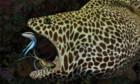 Bilder: Expedition Reef