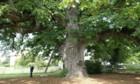 La puissance de l'arbre
