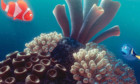 Pictures: Finding Nemo