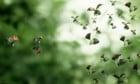 Pictures: Minuscule 2 - Les mandiblues du bout du monde
