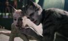 Pire film de l'année: «Cats» grand vainqueur des Razzie Awards 2020
