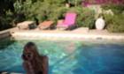 Pictures: A Bigger Splash