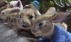 Bilder: Peter Hase 2 - Ein Hase macht sich vom Acker