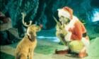 (Re)découvrez Noël au cinéma (TOP5)