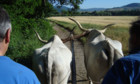 Bilder: A passo di bove – Eine Ochsentour