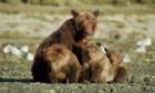 L'ours en moi