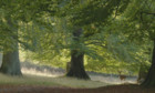 Bilder: Das geheime Leben der Bäume