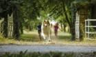 Bilder: Lassie - Eine abenteuerliche Reise