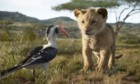 Pictures: The Lion King
