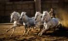 Bilder: Ben-Hur