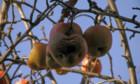 Bilder: Apfel und Vulkan – Auf der Suche nach dem was bleibt