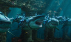Bilder: Aquaman