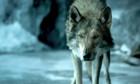 Bilder: Alpha