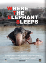 Where the Elephant Sleeps