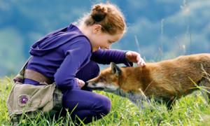 Bilder: Der Fuchs und das Mädchen