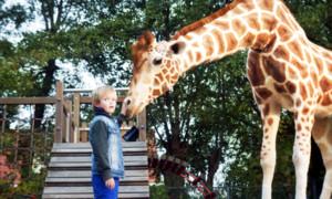 Bilder: Mein Freund, die Giraffe