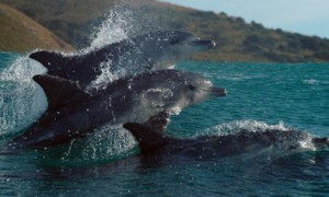 Photos: Oceans 3D