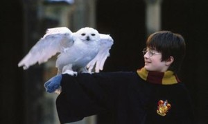 Photos: Harry Potter à l'école des sorciers
